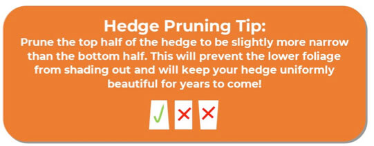 A guide to How to Prune best trees for privacy. Best Bushes for privacy. Privacy shrubs pruning tip.