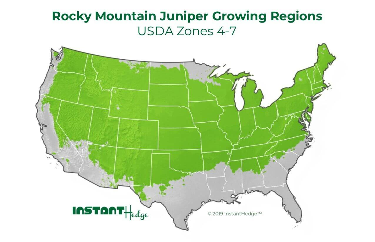 Juniper Wichita Blue Growing Regions