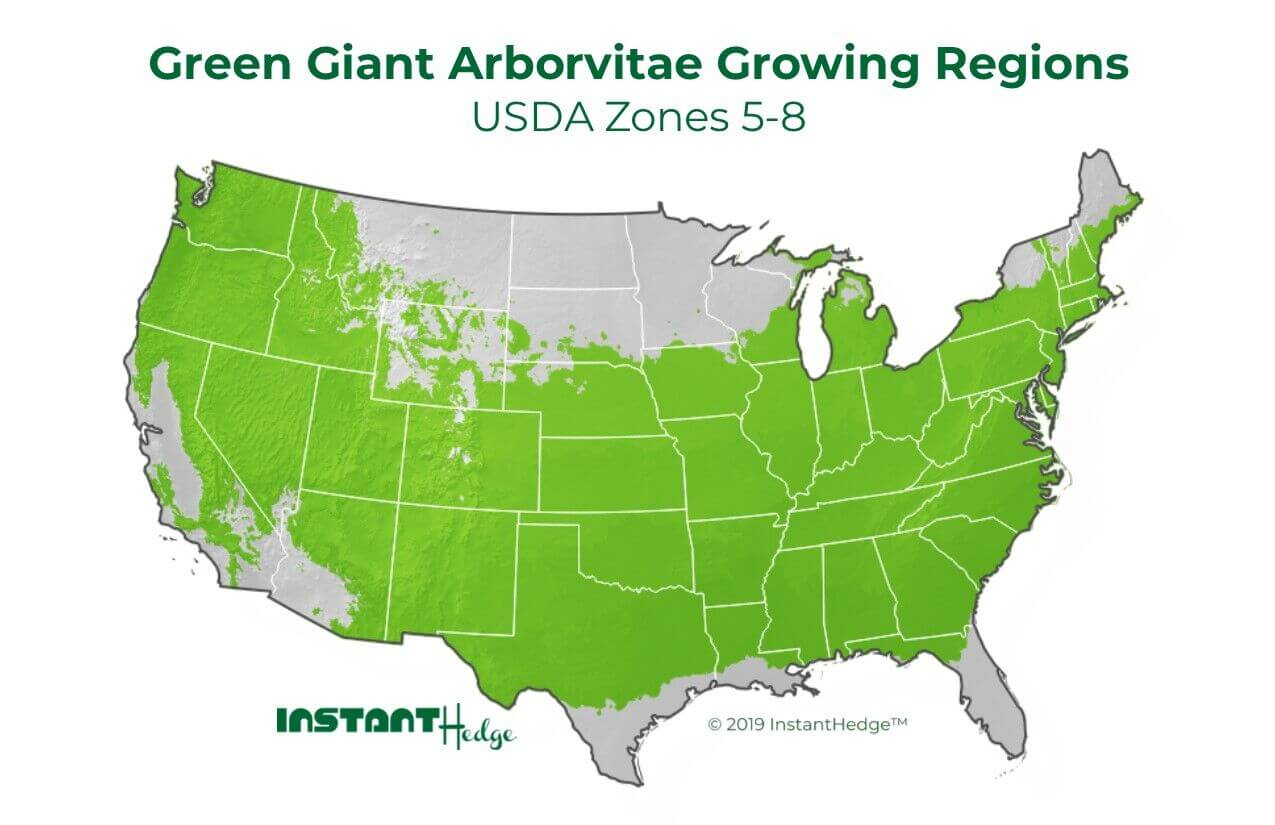 Green Giant Arborvitae Growing Region