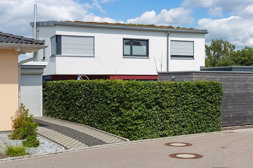 1118737652-fagus-beech-privacy-hedge-urban-suburban-street-driveway-patio-noise-block