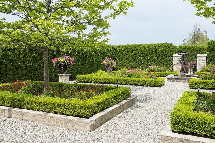 143658982-Buxus-thuja-occidentalis-park-formal-estate