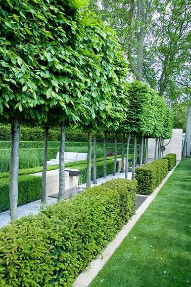 229027474-taxus-yew-buxus-boxwood-hedge-low-border-park-estate-formal-modern-contemporary-fountain-water-lawn-summer-pleached-trees