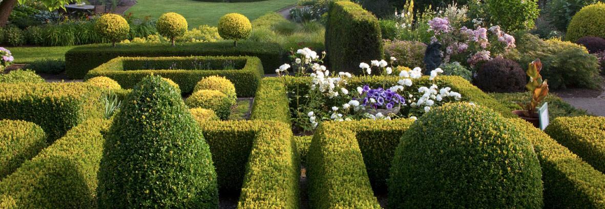 Knot gardens
