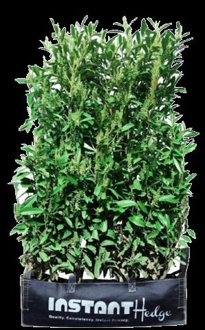 InstantHedge prunus schip laurel hedge fabric bag convenient