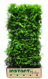 Buy deer resistant hedges. Best deer resistant shrubs online at best prices.
