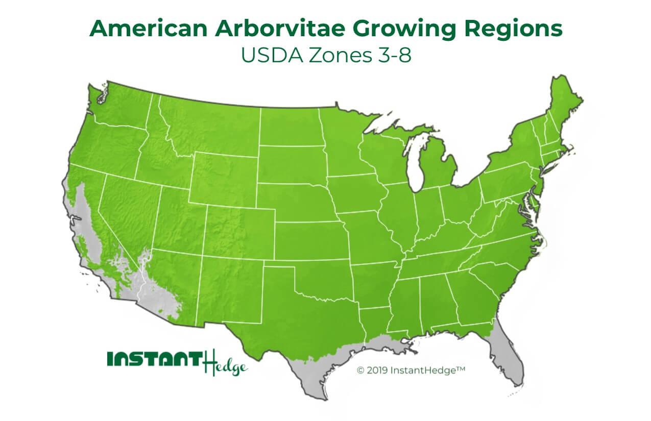 American Arborvitae Growing Condition