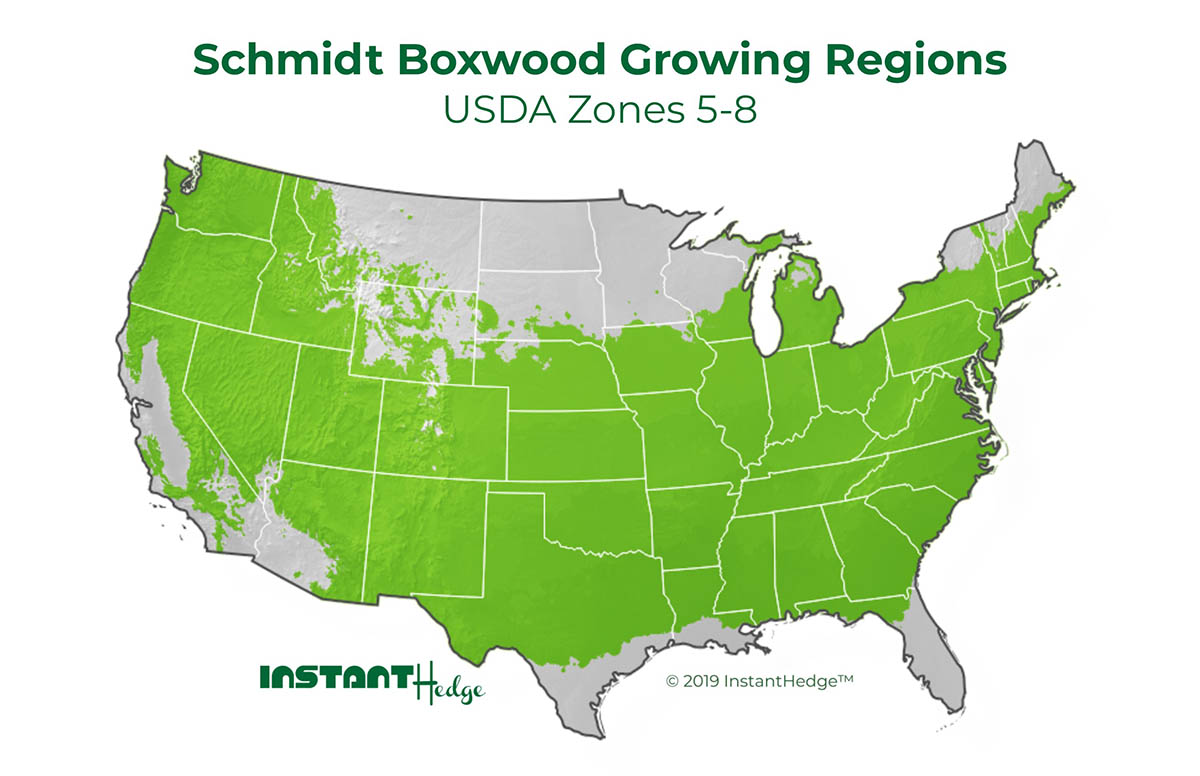 boxwood sempervirens growing regions